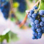 Druiventros zuid afrika proeverij, druiven, wijnproeverij, onbekende druiven, bekende druiven, wijnspijs, wijnquiz, vrijdagmiddagborrel