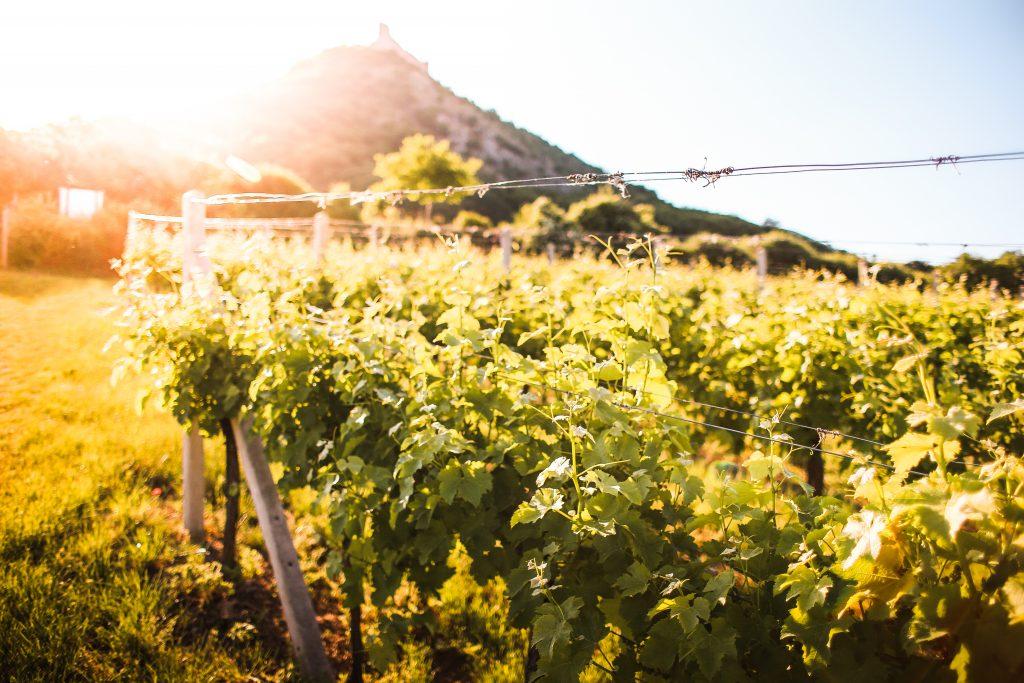 Wijnproeven aan Huis, Haarlem, Zuid-Afrika, Proeverij, Wijnproeverij, Wijn, Vermentino, Pinotage