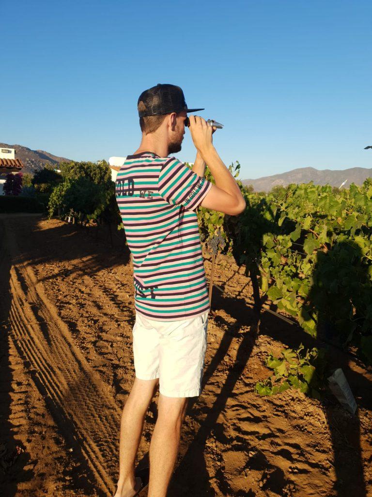 Robert meet het suikergehalte van de druiven met behulp van een refractometer.
