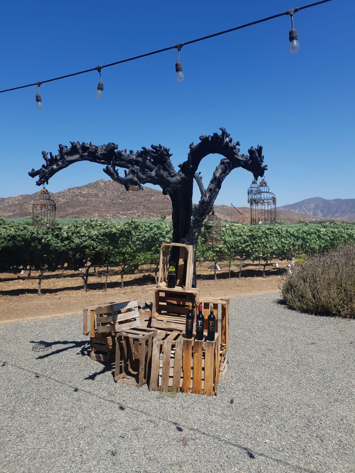 Mexicaanse Tempranillo wijngaard Trevista met uitzicht op de Monte Xaniac