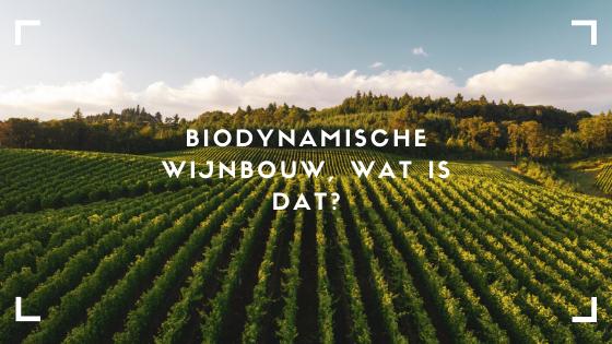 Biodynamische wijnbouw, we zien en horen het steeds vaker. Maar wat is dat nou eigenlijk? In deze blog leest u er alles over!
