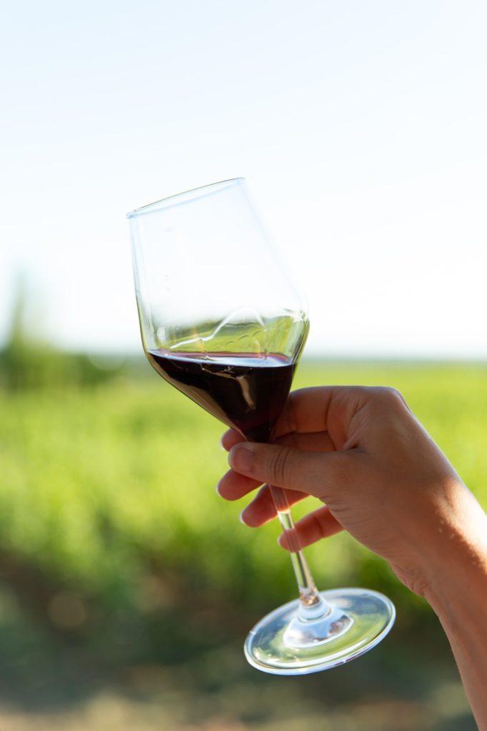 In de Zuid-Afrikaanse wijnbox is natuurlijk ook een Pinotage te vinden. Maar wist u dat deze druif speciaal ontwikkeld is voor het Zuid-Afrikaanse klimaat. Het is een kruising van de Pinot Noir en de Hermitage