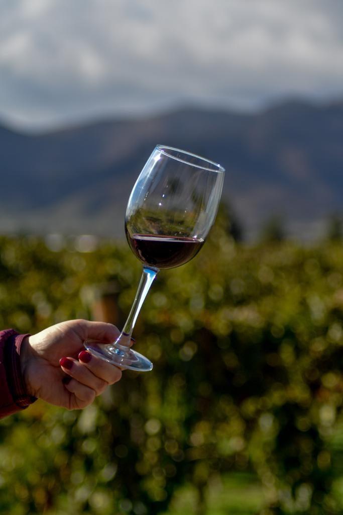 Een wijnbox vol met VIQH klassiekers. Deze box met kwaliteitswijnen bezorgen wij bij u zodat vanwege de maatregelen van het RIVM en de Nederlandse overheid omtrent het Coronavirus (COVID-19) gewoon van onze wijnen kan blijven genieten