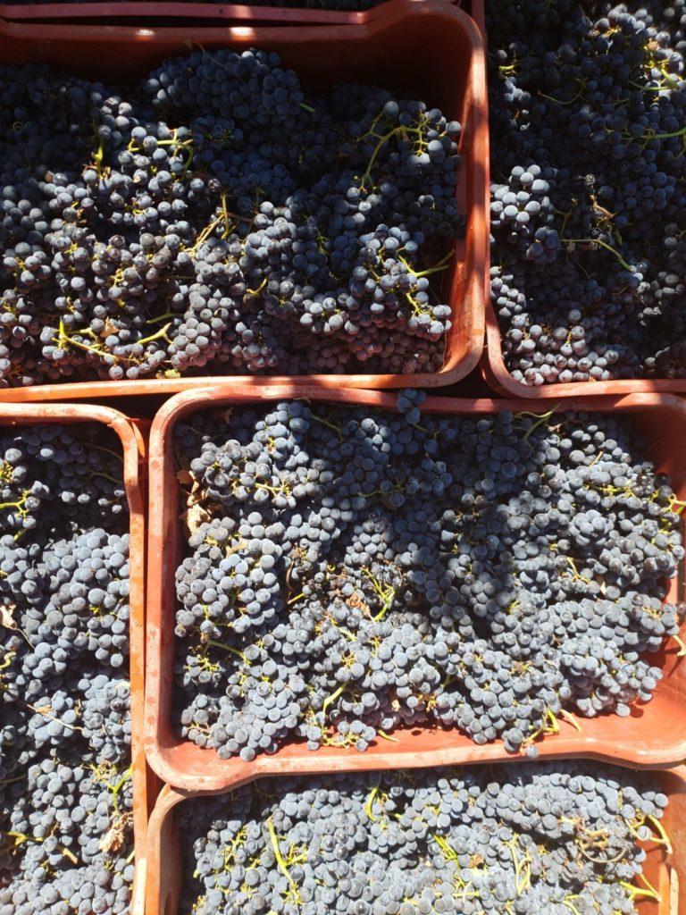 In de Zuid-Afrikaanse wijnbox zit onder andere de Mont Destin 11 Barrels. Voor deze Zuid-Afrikaanse wijn worden alleen de druiven van de hoogste kwaliteit gebruikt. Wilt u deze wijn proeven? Bestel dan uw wijnbox bij viqh aan huis