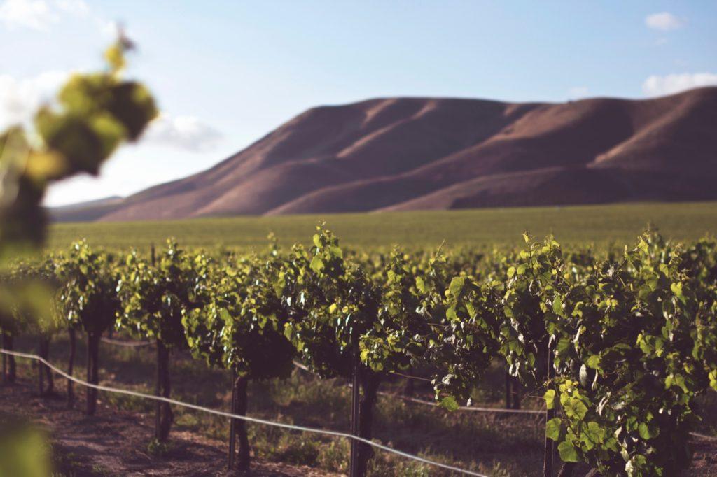 Deze Zuid-Afrikaanse wijngaard is onderdeel van de nieuwe wijnwereld.