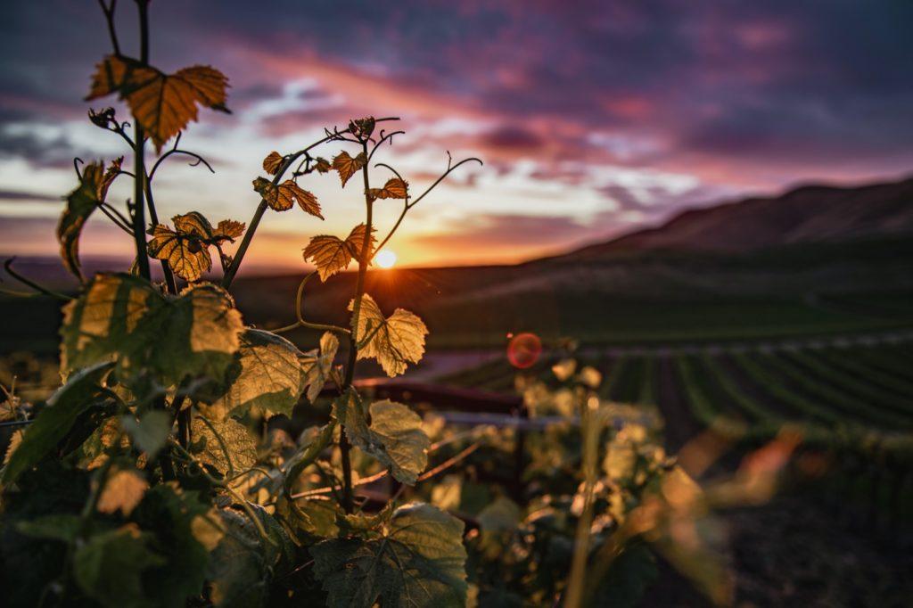De Spaanse wijngaard waar een van de wijnen vanuit de Johan Cruijff wijnproeverij vandaan kwam. Wilt u ook een gepersonaliseerde wijnproeverij bij u op locatie? Vraag dan hier uw offerte aan!
