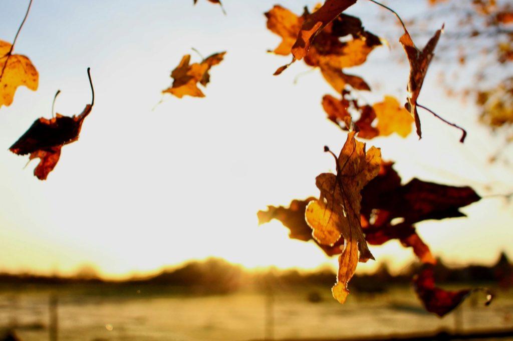 Van welke najaarswijn geniet u het liefst bij het vallen van de bladeren?