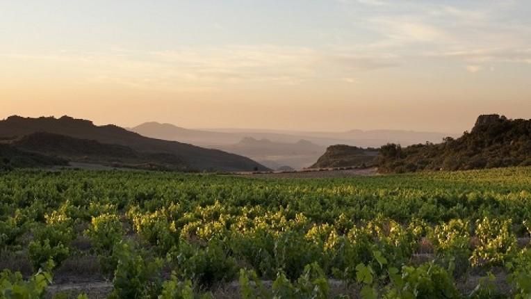 Steun de Zuid-Afrikaanse wijnbouw middels deze wijnbox. Hierin vind u onder andere een sauvignon blanc van het Zuid-Afrikaanse wijnhuis Neil Ellis